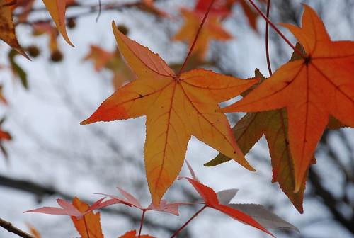 Prospect Park leaves in November