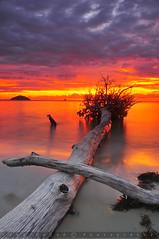 Makrifat Tersembunyi (Azmi Majid) Tags: sunset tree beach island nikon malaysia borneo sabah d300