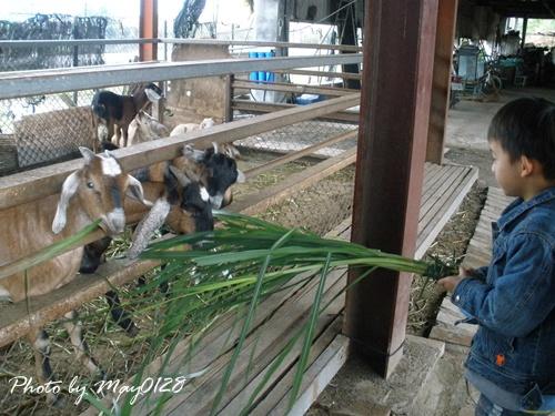 2009 12 20_11可達羊場.JPG