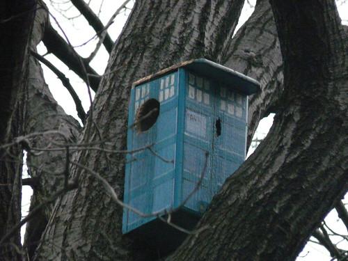 The TARDIS squirrel house