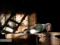 ..momenti di gioco.. (andrea.martinetto) Tags: shadow abandoned stair factory tetto shadows decay ombra olympus ombre erba scala buco 43 oly ruggine bambola ferro fabbrica metallo abbandonata bambolotto quattroterzi addandono