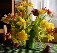 alternder Tulpenstrau 2009 03 (28) (Chironius) Tags: flowers flower fleur blossom flor blossoms gelb tulip fiore blte tulipa tulpen tulpe liliaceae  liliales  liliengewchse lilienartige struse lilioideae
