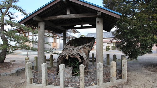 Sako's pine tree