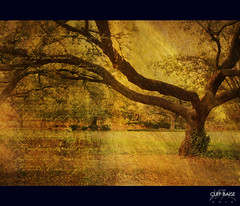 The Lovers (Cliff_Baise) Tags: tree texture nature lovers valentines romantic