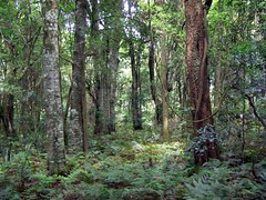 Robertson Nature Reserve (Poytr) Tags: ccc illawarra aaabbb vrfp nswrfp australianrainforesteducation warmtemperaterainforest robertsonnsw robertsonnaturereserve protectedareasofnewsouthwales rainforestplantsofaustralia warmtemperatearf