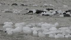 Glacial Ice River