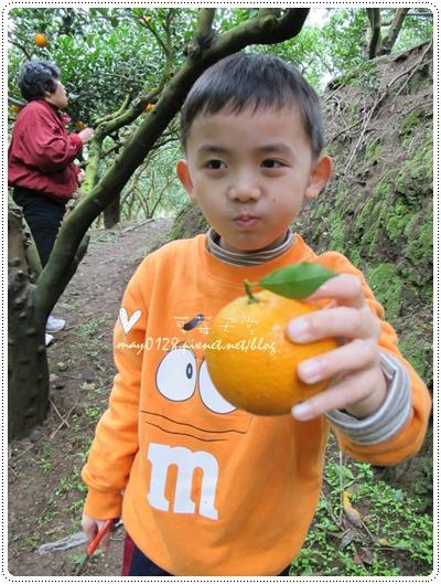 關西採草莓橘子牛欄河2010.02.20-30