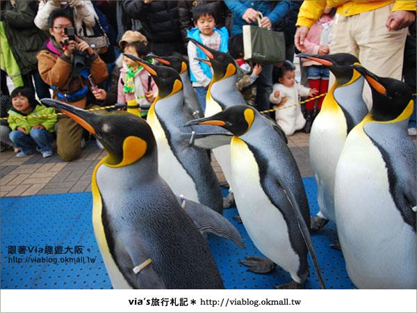 【via關西冬遊記】大阪海遊館~冬季限定!無敵可愛企鵝遊行來囉!21