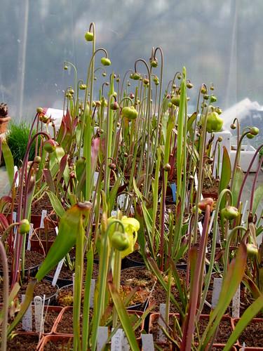 Fleurs et tubes.... MAJ 4473236481_16f73de063