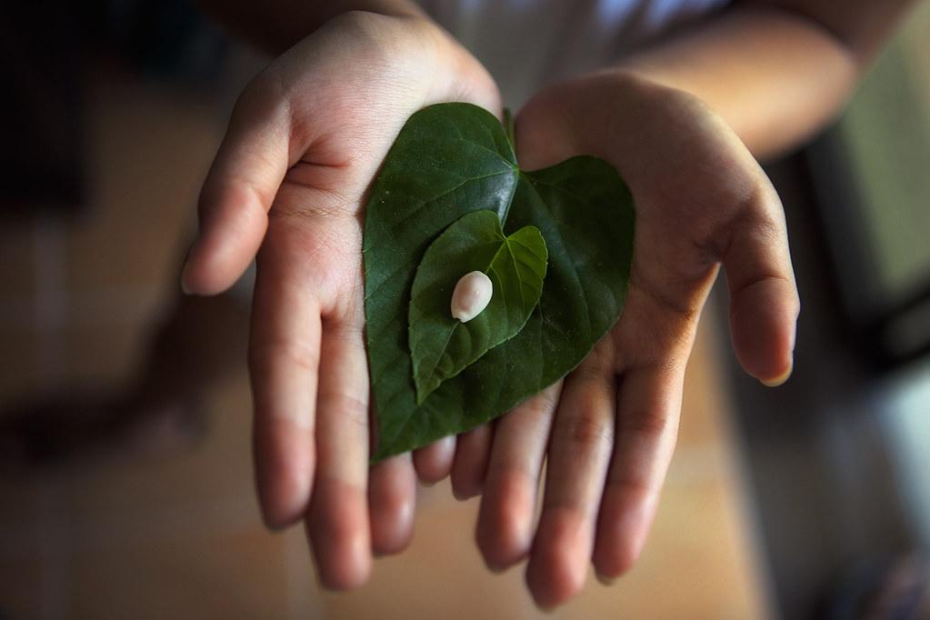 Leaf leaf shell