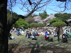 DSCN7905 (Luca Nonato) Tags: tree japan cherry blossom sakura fiore albero ciliegio fioritura
