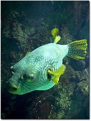Fish #7 (Cortex69) Tags: fish water lumix aquarium eau panasonic exotic g1 fishes poisson 43 poissons exotique cortex69