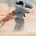 Military Shows Appreciation of Working Dogs