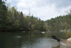 Jump (ash) Tags: county camping dogs creek swimming ga river landscape jumping hiking clayton stick dicks leaping rabun chasing deliverance chatooga