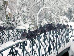 France,Tarn, Albi, la cit piscopale, Patrimoine mondial de l'Unesco (jpazam) Tags: pigeon cit cathdrale neige ccile tarn parc albi patrimoine cathare humanit croisade rochegude