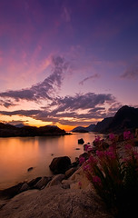 LOFOTEN (~~~johnny~~~) Tags: flowers sunset sea summer sky sun seascape mountains beautiful norway clouds reflections wonderful island golden nikon rocks skies dof purple magenta august lofoten depth nordnorge midnightsun lofotenislands 10mm greatescape henningsvr northnorway henningsvaer longexpo d40 nd8 kartpostal vgan vaagan abigfave worldlandscapes hoyand8 tamron1024mm