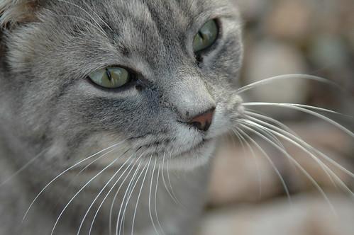 Gato en Finca El Paraiso
