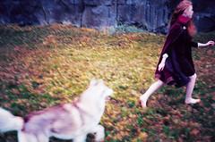 Velvet dreams (Saga) Tags: park blue autumn red dog grass vintage landscape lava iceland model husky alma velvet kristin national siberian sig saga thingvellir þingvellir elisabet