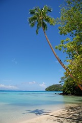 Coconut tree and lagoon, Huahine