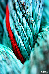 A Strand of Red in the Rope (danleyc) Tags: macro challengeyouwinner flickrchallengegroup flickrchallengewinner thepinnaclehof tphofweek54