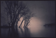 New Dawn (isvibilsky) Tags: trees reflection fog pinhole cyanotype altprocess contactprinting alternativeprintingprocess