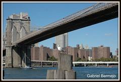 Posando para la foto - Nueva York (Gabriel Bermejo Muñoz) Tags: nyc bridge urban usa newyork architecture brooklyn puente downtown manhattan seagull gull towers bigapple gaviota metropolitan nuevayork eeuu granmanzana puentedebrooklyn gabrielbermejomuñoz