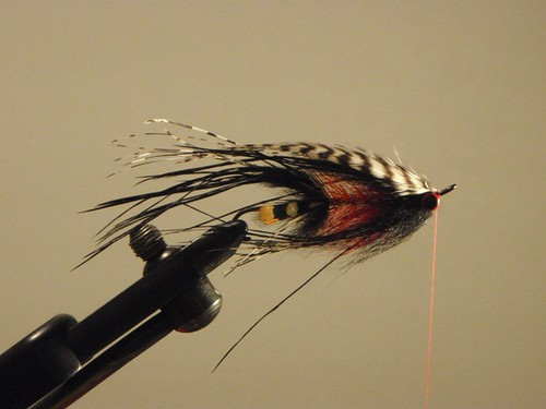 tying intruder flies