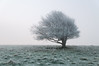 ice tree (Laurence Cartwright) Tags: uk mist tree fog sussex photo nationalpark photograph nationaltrust southdowns devilsdyke fulkingescarpment laurencecartwright