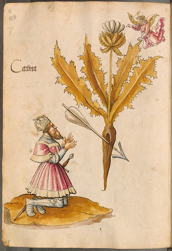 Arzneipflanzenbuch, 1525 b