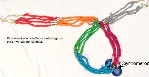 Pareamento de homólogos heterozigotos para inversão Pericêntrica