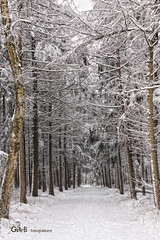 snowy lane (GdeB fotografeert) Tags: borger ees boswandeling landvanbartje wintersbeeld gdebfotografeert mygearandme mygearandmepremium januari2010