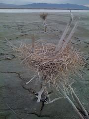 Cool birds nest Salton sea (north/south connection) Tags: deleteme5 deleteme8 deleteme deleteme2 deleteme3 deleteme4 deleteme6 deleteme9 deleteme7 deleteme10 deleteme11