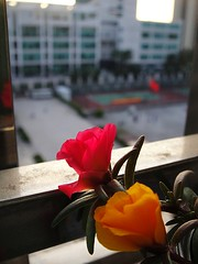 DSC02285 (wen21322) Tags: sunset flower dormitory