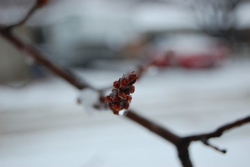 snow day - berries