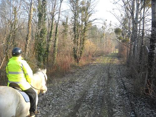 Ballade pour Equine Rescue 4354189474_7bee442ca3