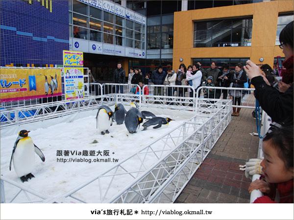 【via關西冬遊記】大阪海遊館~冬季限定!無敵可愛企鵝遊行來囉!3