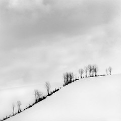 Over the Hill (Michael Diblicek) Tags: trees winter blackandwhite cloud white snow black cold tree up st clouds landscape grey cloudy line hedge bresson franchecomt haute snowscape saone comt franche hautesaone carrfranais stbresson levaldajol