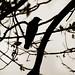 El pájaro a contraluz