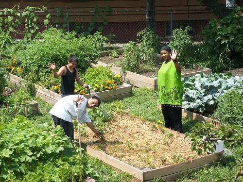 SCLT Community Gardens