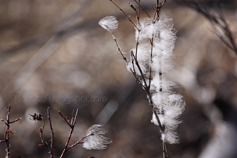 Breezy (by KansasA)