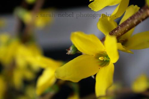 . yellow flowers .