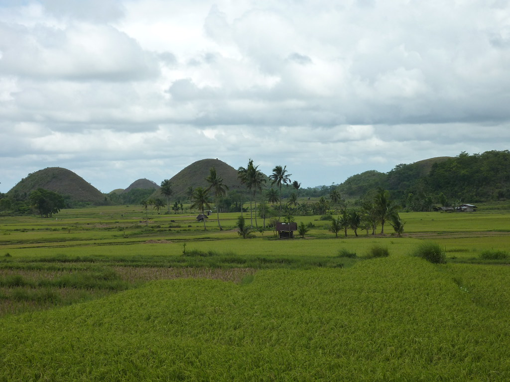 Bohol-Talibon-Chocolate Hills (55)