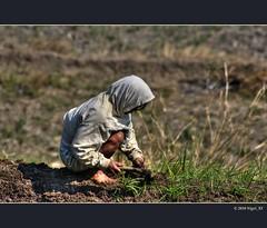... working in the rice field (nigel_xf) Tags: nikon rice terrace philippines bauer farmer nigel philippinen d300 reisterrassen reisanbau nikond300 nigelxf