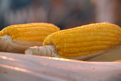 Yellow Corn (Rolex823) Tags: yellow canon photography corn spirit philippines optical papis carotene yellowcorn expressyourself artisticexpressions platinumphoto anawesomeshot spiritofphotography 100commentgroup ikawaypinoy