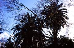 National Garden (demeeschter) Tags: greece athens city town building architecture street park parliament gaurd trees zappeion botanical garden