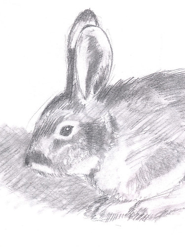 Rabbit detail