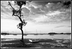 The Outcast (dtmateojr) Tags: sea blackandwhite seascape tree water photoshop canon boat mud yacht shoreline wave australia shore queensland bnw lonelytree canon40d pointhalloran dtmateojr