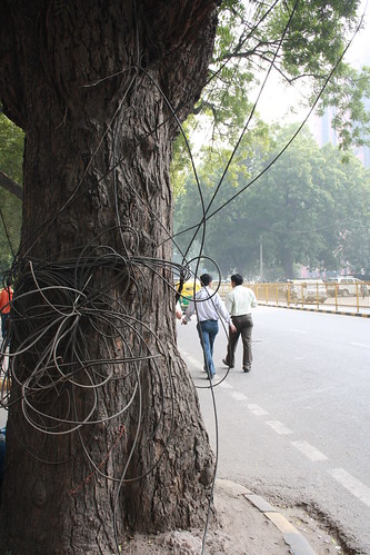 Trees of Delhi