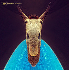 How are you feeling? (Srdjan Kirtic) Tags: animal scary nikon portait twist freak twisted mule freaks bizare