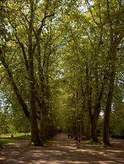 Tbingen (ernae) Tags: trees germany deutschland tr allee tbingen schwaben badenwrttemberg neckarinsel platanenallee skaland trjgng